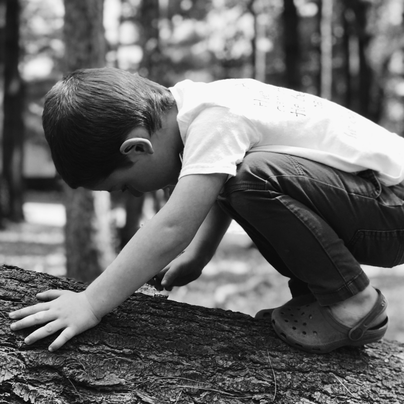 A child looks closely at a log.