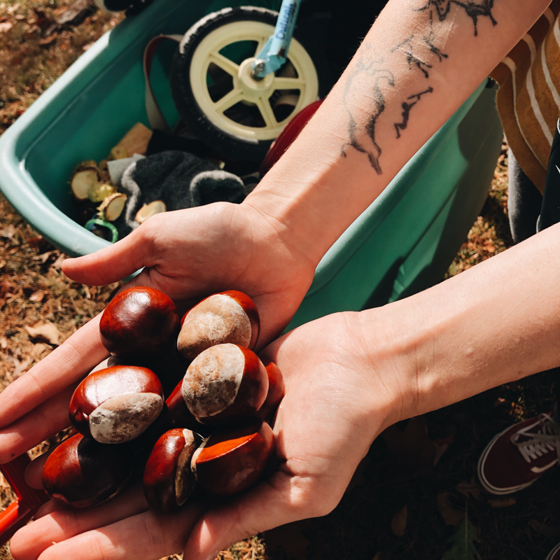 Handful of chestnuts.