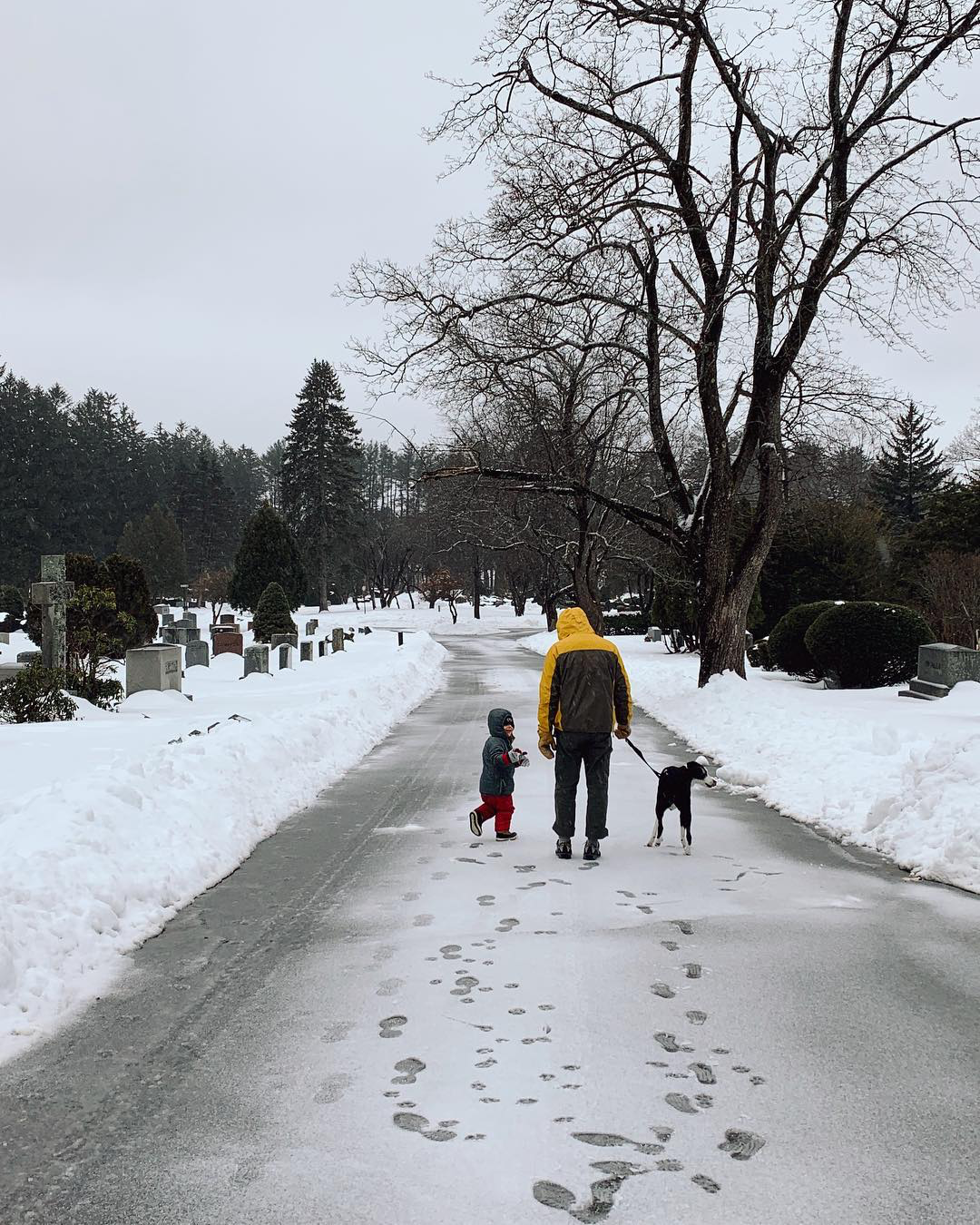 Man in yellow rain coat walking a black and white dog, with a 3 year old walk through a snowy graveyard.