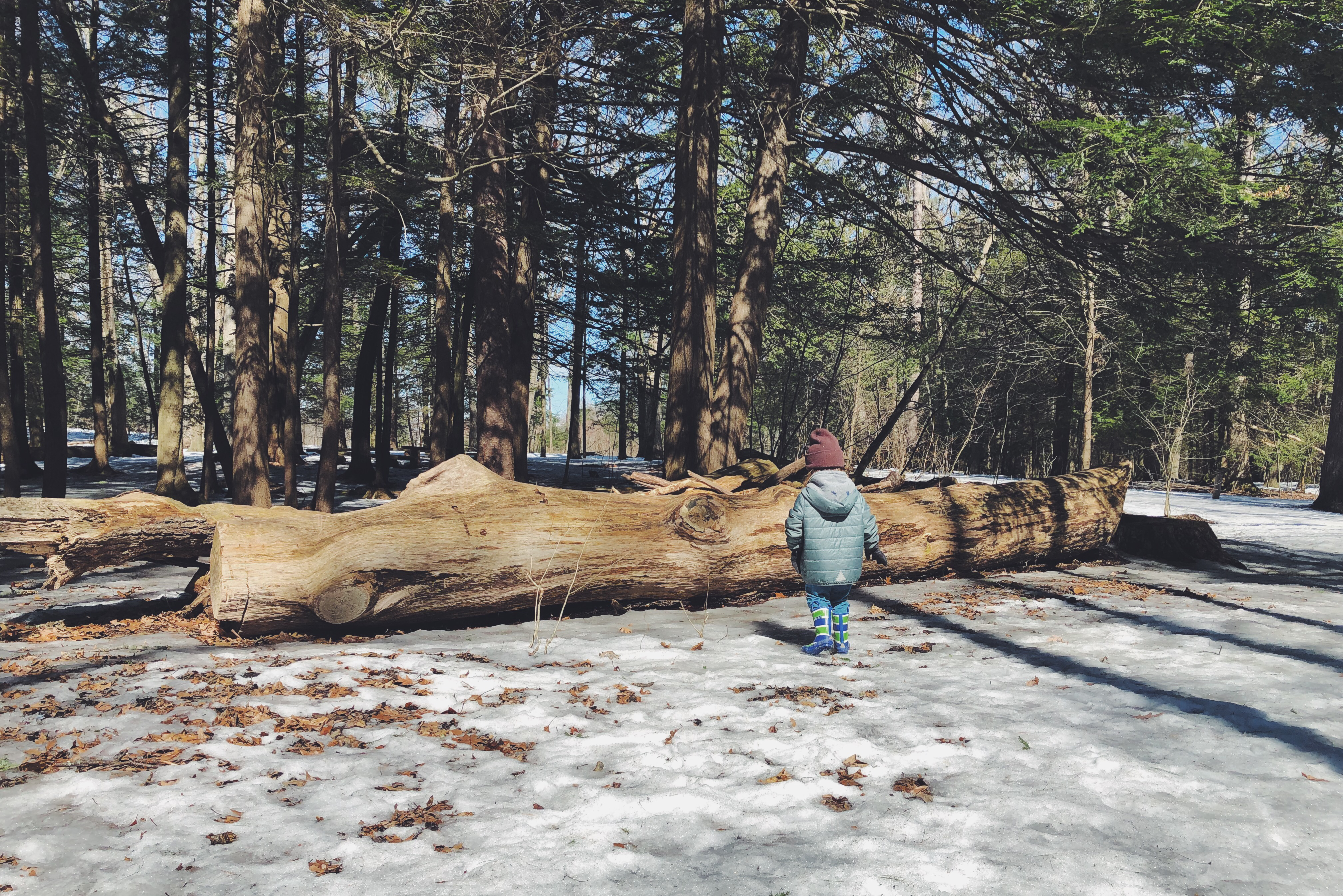 Child in a winter coat walking towards a fallen log in the woods.