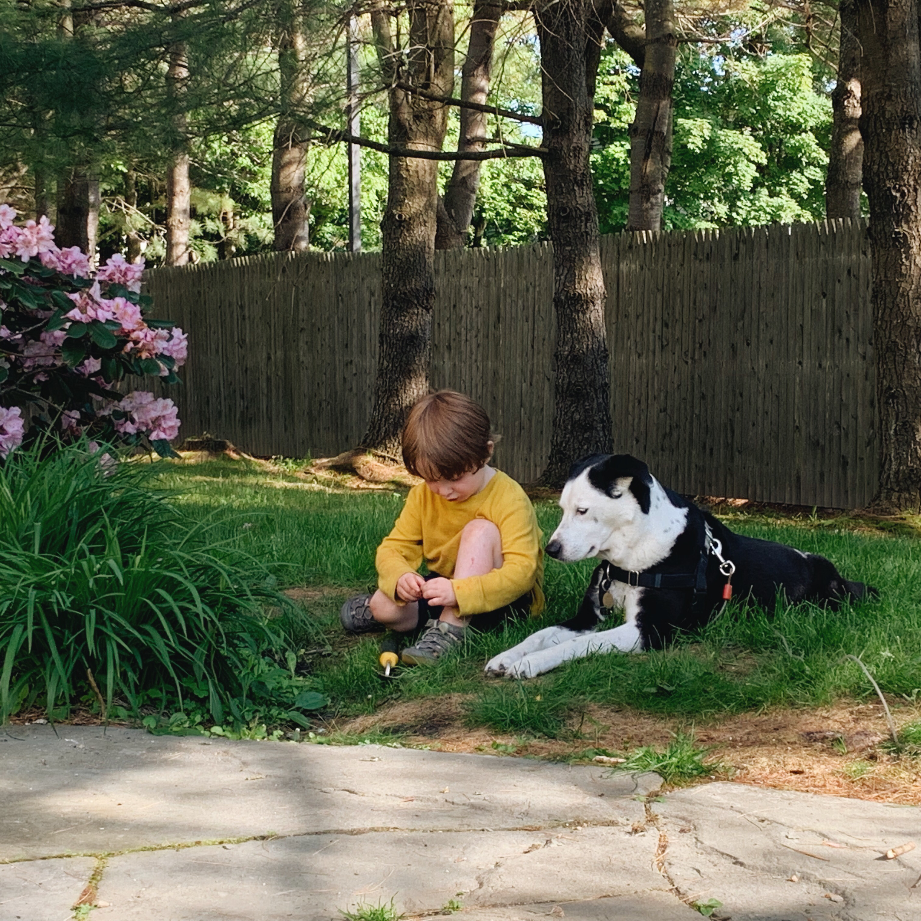 Young child sits in the grass with a black and white dog.