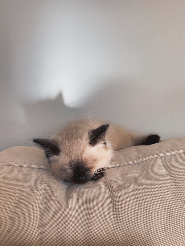 A snoozing kitten on top of a couch.